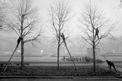 LA 028_Baumschnitt_Ehrenmal_Berlin-Treptow_1981