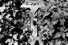 SL 031_Davidstern-Jüdischer Friedhof_Berlin-Weißensee_1983
